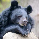 Есть ли у медведя хвост ?