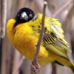 Болеют ли птицы бешенством ?