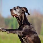Почему нос собаки меняет цвет ?