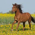 Что едят лошади ?