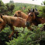 Сколько живут лошади ?