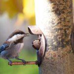 Сколько живут птицы ?