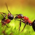 Сколько живут муравьи ?