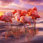 Сколько живут фламинго ?