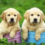 В каком возрасте лучше брать щенка ?