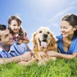 Почему собаки так любят лежать на солнце ?