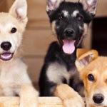 Можно давать собакам антибиотики ?