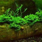 Какова экологическая значимость мохообразных ?