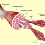 Что такое атрофия дельтовидной мышцы ?