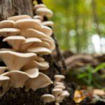 Какова роль грибов в экосистеме ?