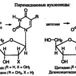 Каковы мономеры нуклеиновых кислот ?