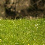 Какие животные питаются травой ?