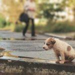 Какие животные живут одиночно ?