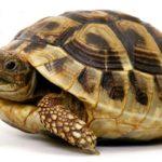 Что общего у всех рептилий ?