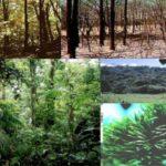 Каковы различные типы лесных экосистем ?