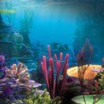 Растения мирового океана