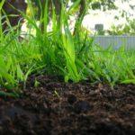 Как растения избавляются от отходов ?