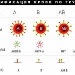 Сколько групп крови имеют люди ?