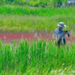 Что изучает эколог ?