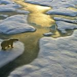 Каковы некоторые факты о глобальном потеплении ?