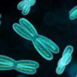 Где в клетке находятся хромосомы ?