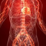 Сколько капилляров находится в организме человека ?