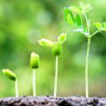 Как растения получают свои питательные вещества ?