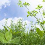 Чувствуют ли растения боль ?