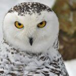 Какое животное имеет толстые перья ?