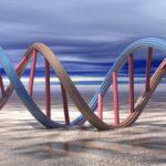 Почему ДНК необходимо реплицировать ?