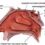 Какова функция носовой раковины ?