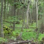Где расположены лиственные леса ?