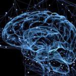 Что такое мозг ?