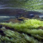 Какие животные питаются водорослями ?
