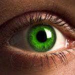 К какой органной системе относится глаз ?