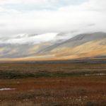 Как растения адаптируются к тундре ?