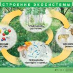 Каковы основные части экосистемы ?
