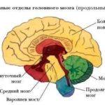 Какую функцию выполняет белый материал в мозге ?