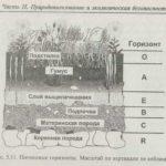 Каковы основные слои почвы ?