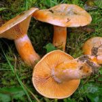 Что влияет на движение грибов ?