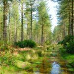 Каковы компоненты экосистемы ?