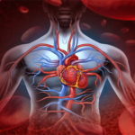 Почему важна система кровообращения?