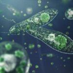 Какова структура клеток Протисты?