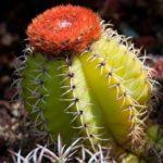 Как адаптируются кактусы к окружающей среде?