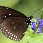 Как дышат бабочки?