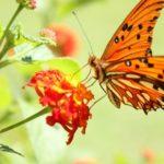Сколько глаз у бабочки?