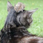 Является ли мышь плотоядным животным, травоядным или всеядным?
