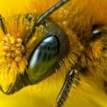 Почему пчелы важны?