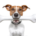 Почему собаки любят кости?