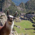 Где находилась империя инков?